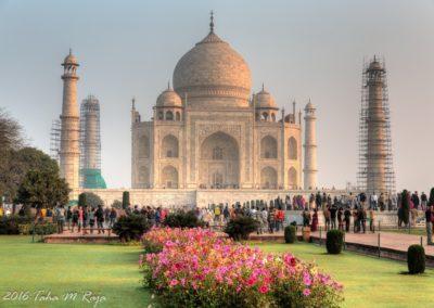 Blooming Taj