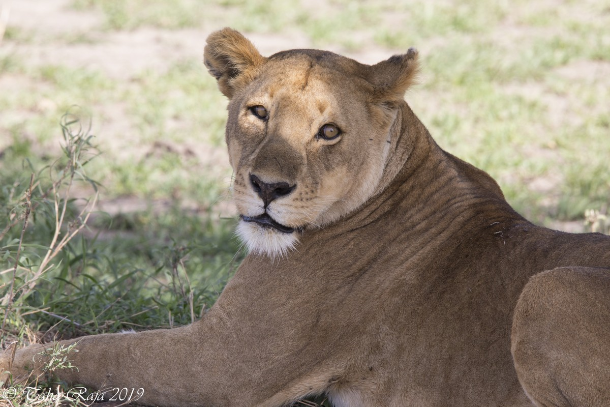 Southern Serengeti 2022