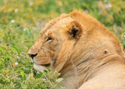 Safari 2018