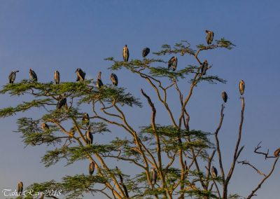 Serengeti Nationakl Park and NgoroNgoro Conservation Area, Tanzania