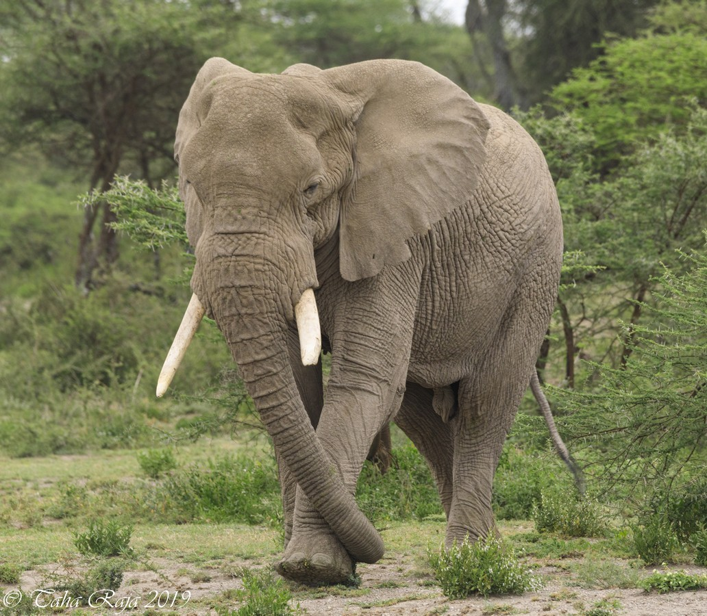 Southern Serengeti and Ngorongoro Migration 2020
