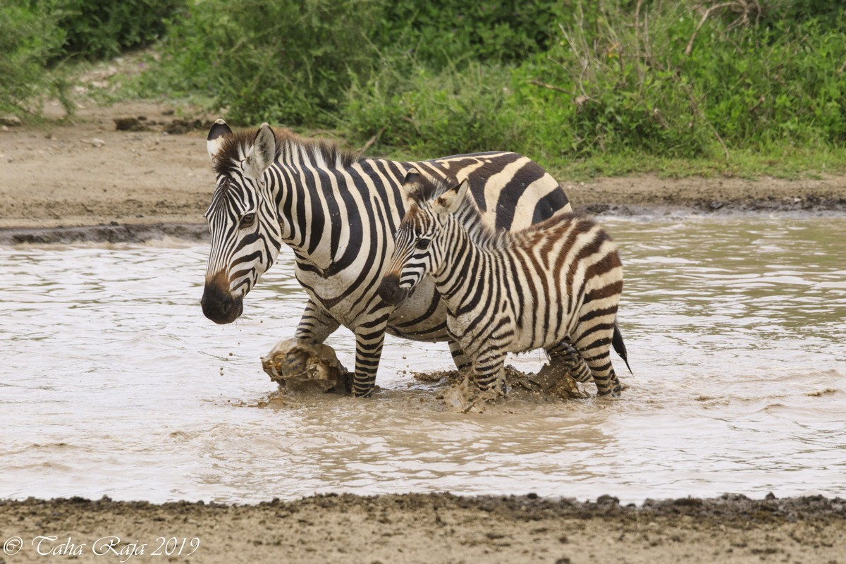 Southern Serengeti and Ngorongoro Migration 2022