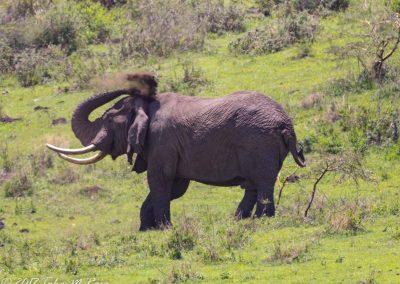 Safari 2019